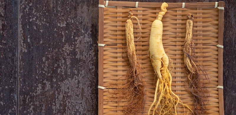 Dried Ginseng - Medicinal Herbs to Boost Energy and Focus - Gurvi Movement
