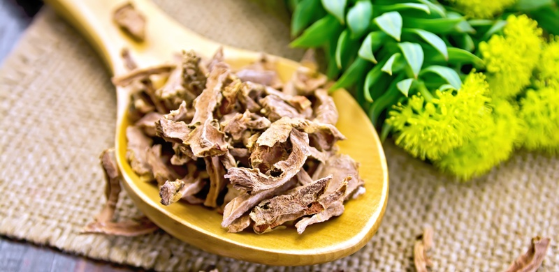 Root dry of Rhodiola rosea - Medicinal Herbs to Boost your Energy and Focus - Gurvi Movement